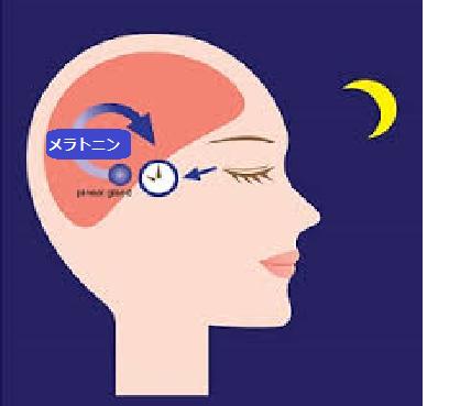 かゆみ 夜 陰部 陰部がかゆい(女性):医師が考える原因と対処法|症状辞典